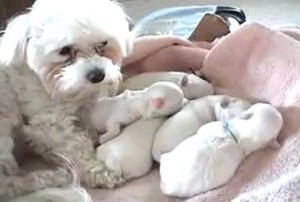 Puppies with mommy